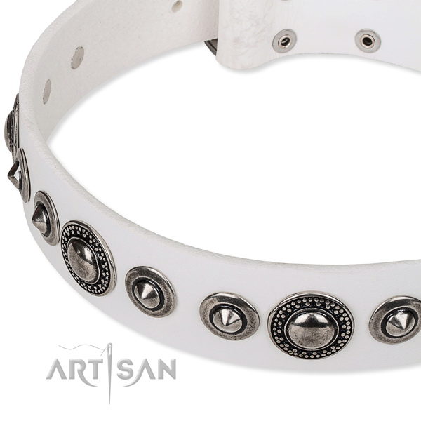 Daily use studded dog collar of quality full grain leather