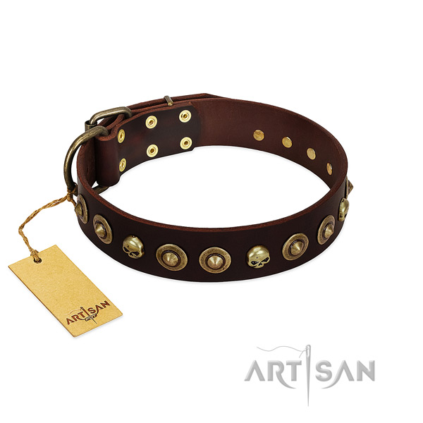 Leather collar with incredible embellishments for your four-legged friend