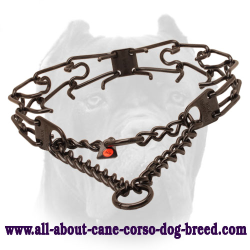 Black stainless steel prong collar for badly behaved dogs