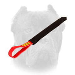 Cane Corso puppy training tug with one handle