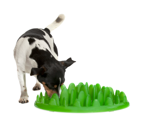 Green plastic dog feeder