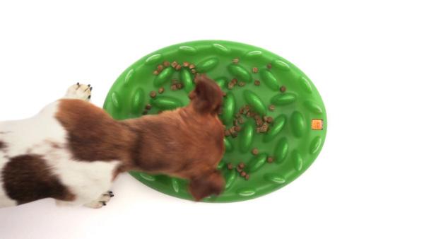 Green lawn dog feeder