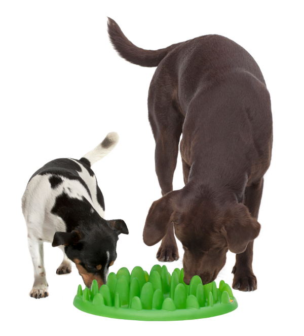 Small dog feeder