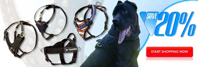 Buy Today High Quality Exclusive Cane Corso Harness