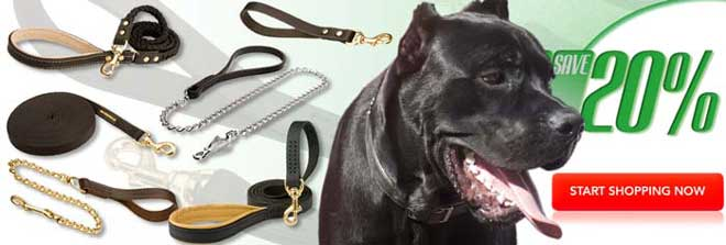 Buy Today High Quality Exclusive Cane Corso Dog Leash