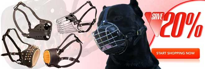 Buy Today High Quality Exclusive Cane Corso Muzzle