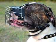 American Bulldog Dog Gear