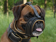 Boxer Dog Gear