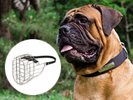 Bullmastiff Dog Gear