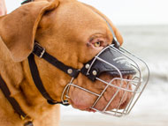 Dogue de Bordeaux Dog Gear