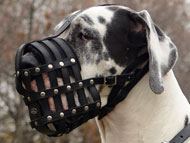 Great Dane Dog Gear