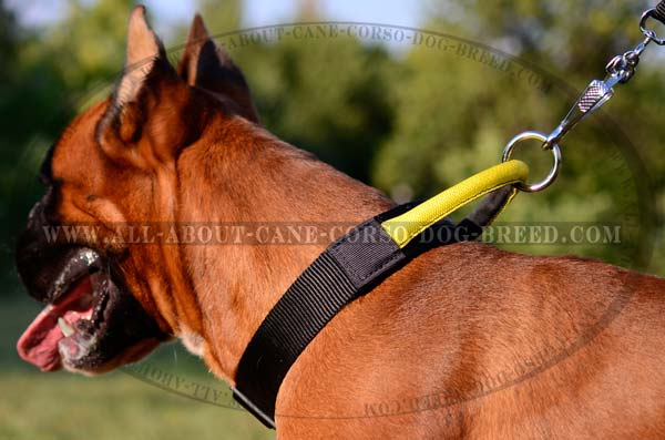 Lightweight Nylon Dog Collar for Boxers