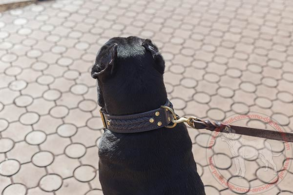 Braided Cane Corso collar with durable brass hardware