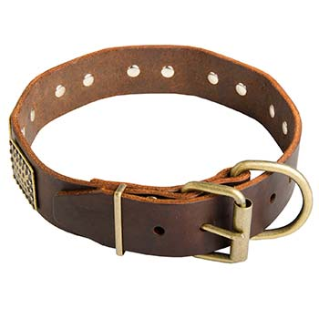 Brass fittings of Cane Corso collar for walking