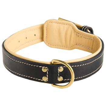 Solid durable brass fittings of leather Cane Corso collar