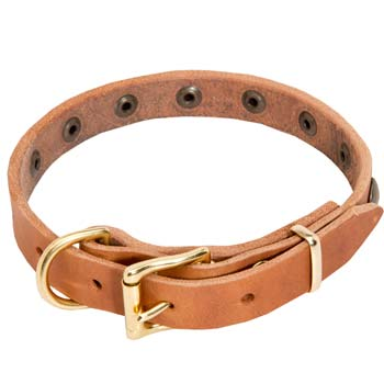Brass fittings of training leather dog collar for Cane Corso