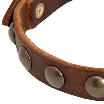 Brass half spheres of leather dog collar for Cane Corso
