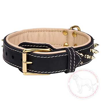 Buckle designer dog collar for Cane Corso