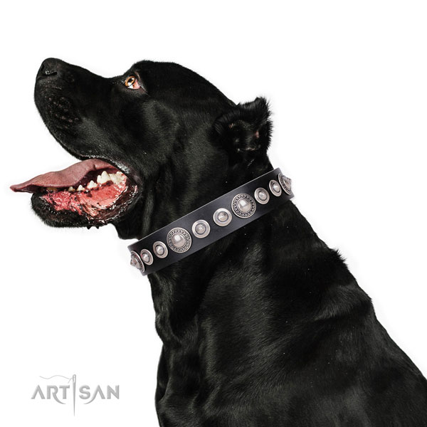 Exquisite embellished leather dog collar for basic training