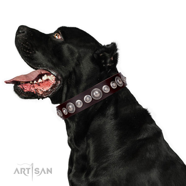 Impressive decorated natural leather dog collar for comfy wearing