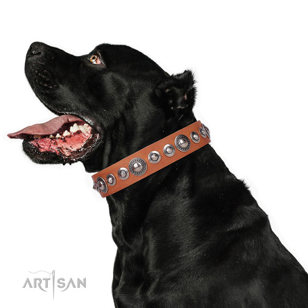Unique studded natural leather dog collar for basic training