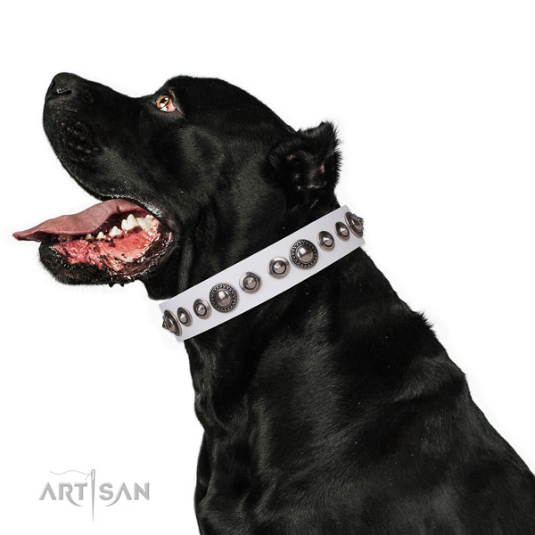 Impressive decorated leather dog collar for walking