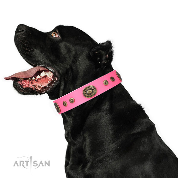 Stylish decorated genuine leather dog collar for basic training