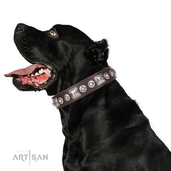 Significant decorated natural leather dog collar for walking