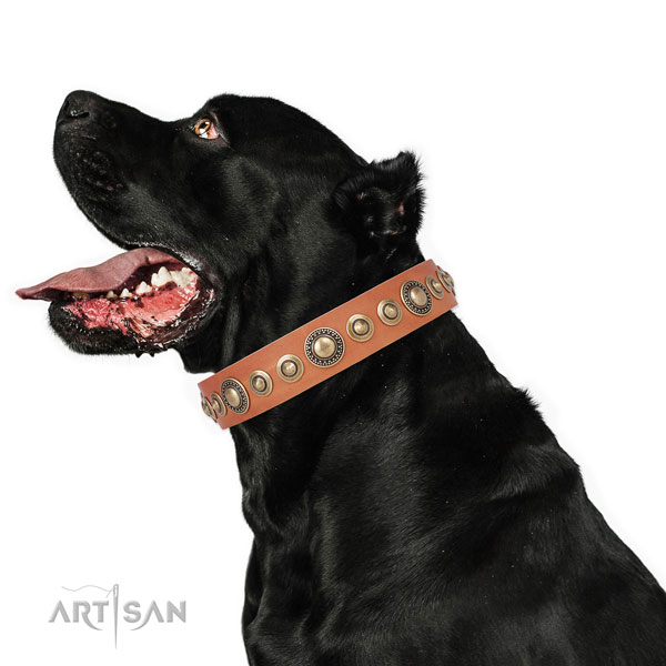 Durable buckle and D-ring on leather dog collar for daily use