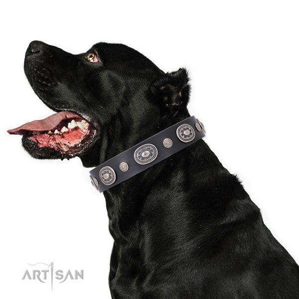 Corrosion proof buckle and D-ring on full grain leather dog collar for stylish walking