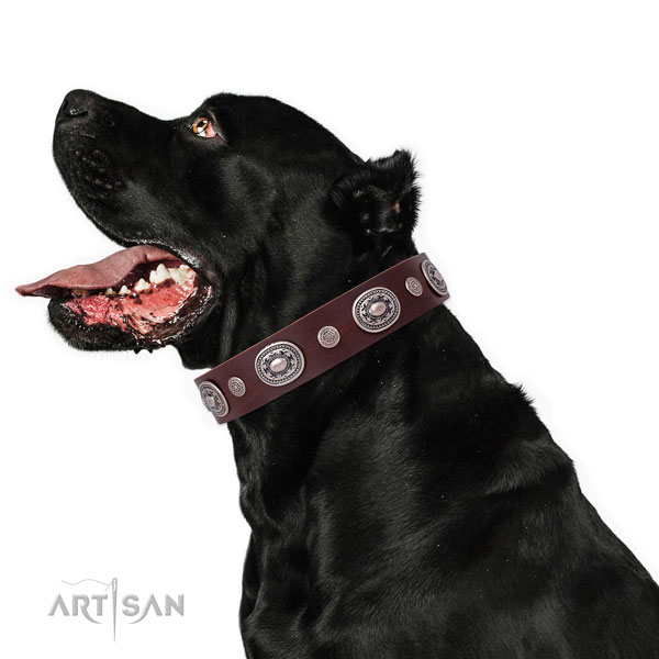 Strong buckle and D-ring on natural leather dog collar for daily use