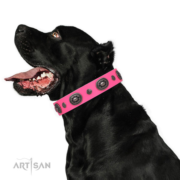 Natural leather dog collar with corrosion proof buckle and D-ring for everyday use
