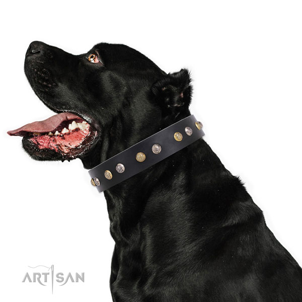 Natural leather dog collar with reliable buckle and D-ring for handy use