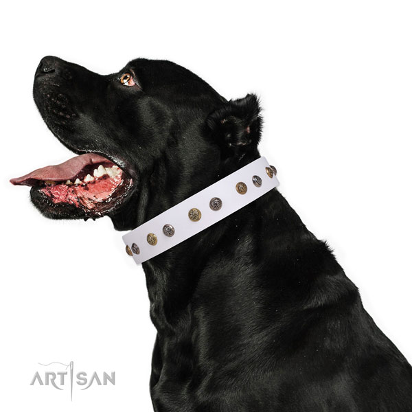 Basic training decorated dog collar made of top notch natural leather