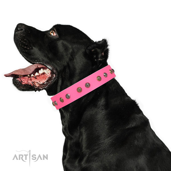 Everyday use decorated dog collar made of durable natural leather