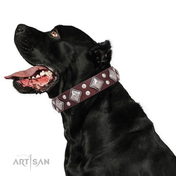 Fancy walking decorated dog collar made of quality natural leather