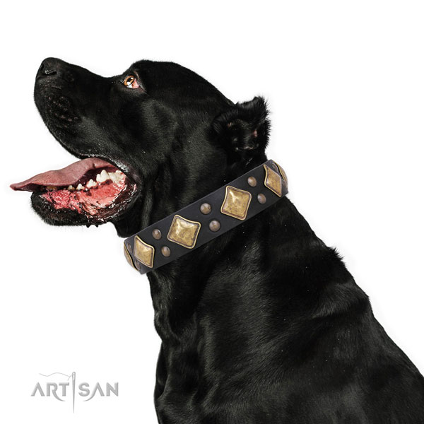 Walking decorated dog collar made of top notch leather