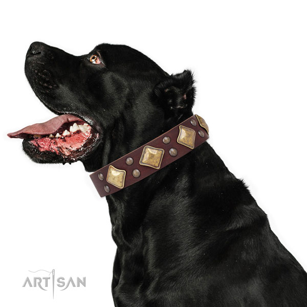 Daily walking decorated dog collar made of top rate genuine leather