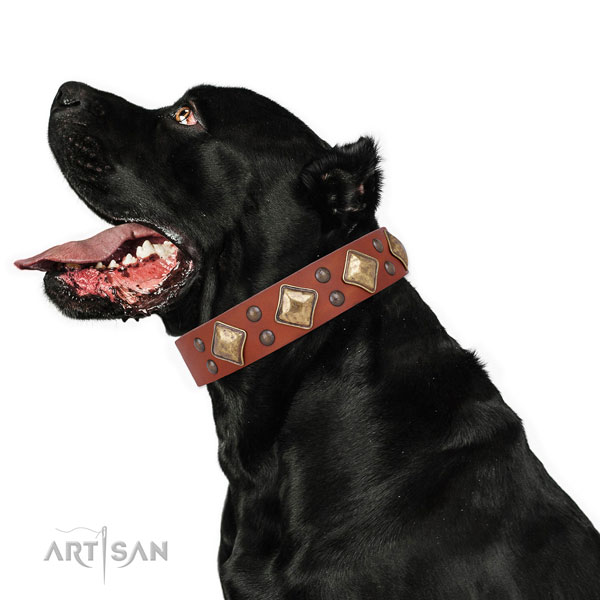 Everyday use studded dog collar made of best quality natural leather
