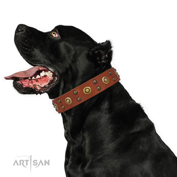 Basic training dog collar with extraordinary studs