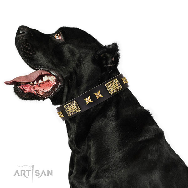 Comfy wearing dog collar with unique decorations