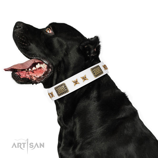 Top notch studs on basic training genuine leather dog collar