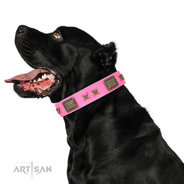Exceptional adornments on everyday use natural genuine leather dog collar