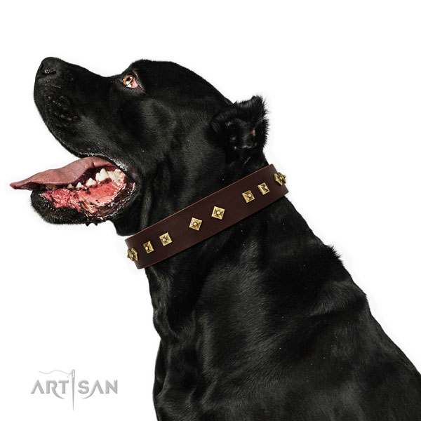 Trendy adornments on comfy wearing full grain genuine leather dog collar