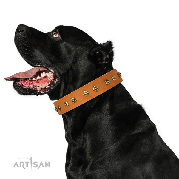 Significant embellishments on daily use dog collar