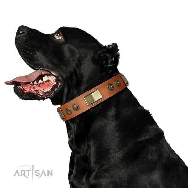 Strong fancy walking dog collar of leather