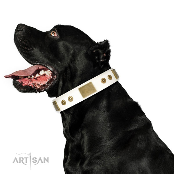 Quality stylish walking dog collar of natural leather
