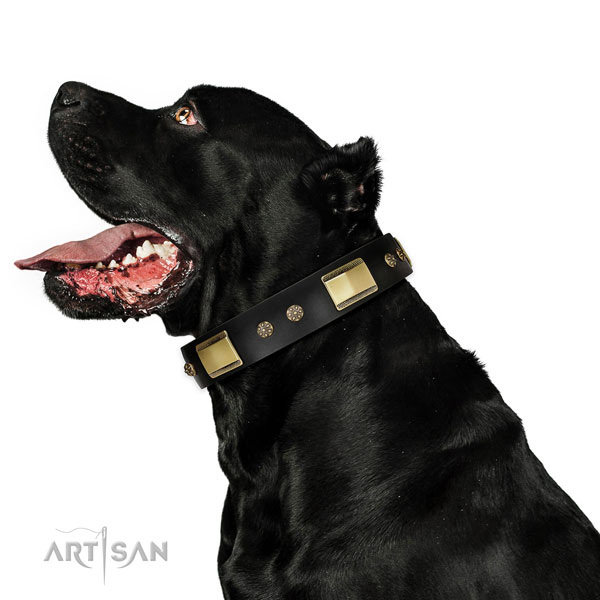 Everyday use dog collar of leather with awesome studs