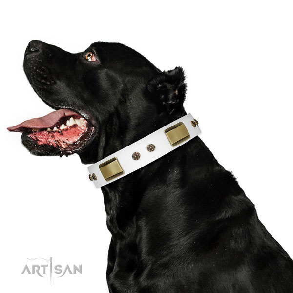 Daily walking dog collar of natural leather with remarkable embellishments