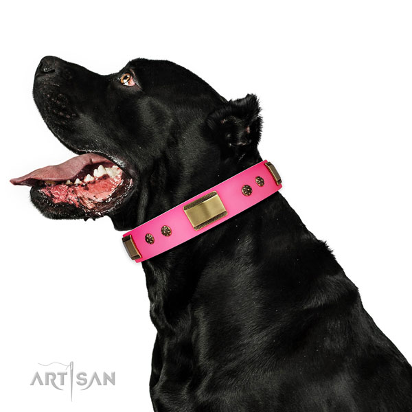 Fancy walking dog collar of leather with designer decorations